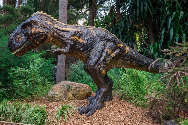 Modèle d'affichage de Nanotyrannus dans le zoo de Perth photos stock