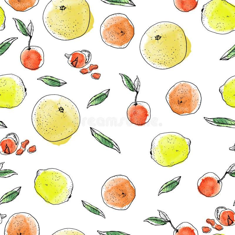 Modèle d'agrumes de croquis d'encre et d'aquarelle sur le fond blanc Pamplemousses, oranges oranges, citrons jaunes illustration libre de droits