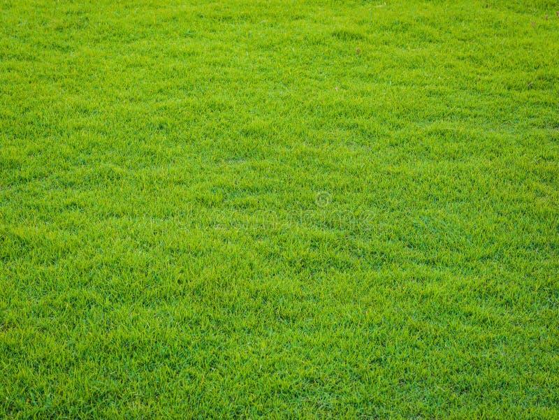 Modèle d'herbe verte de terrain de golf au coucher du soleil Tim images libres de droits