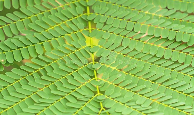 Modèle d'une petite utilité de feuilles de fougère pour le fond photo stock