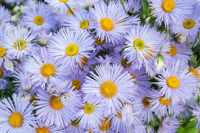 Modèle de beau bouquet de petits fleurons de différentes nuances violettes d'en haut image libre de droits