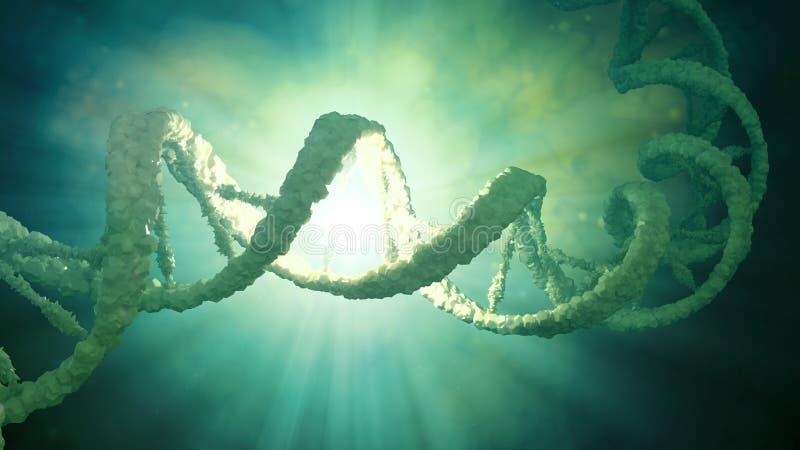 Modèle de brin d'ADN illustration de vecteur