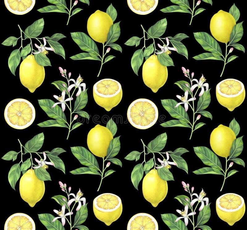 Modèle de citron d'aquarelle sur le fond noir photos libres de droits
