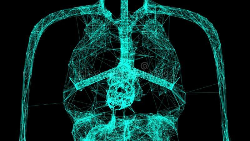 Modèle de corps humain d'anatomie avec les points de connexion, 3d rendant le fond, concept médical illustration stock
