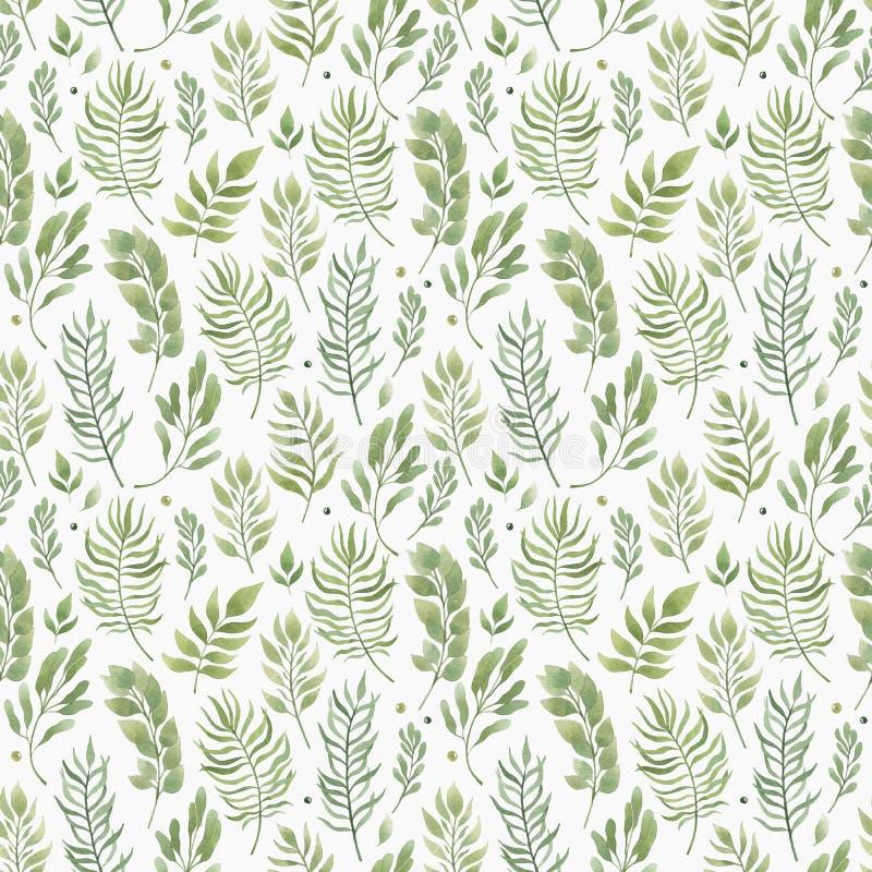 Modèle de fines herbes sans couture avec des feuilles Illustration d'aquarelle illustration libre de droits