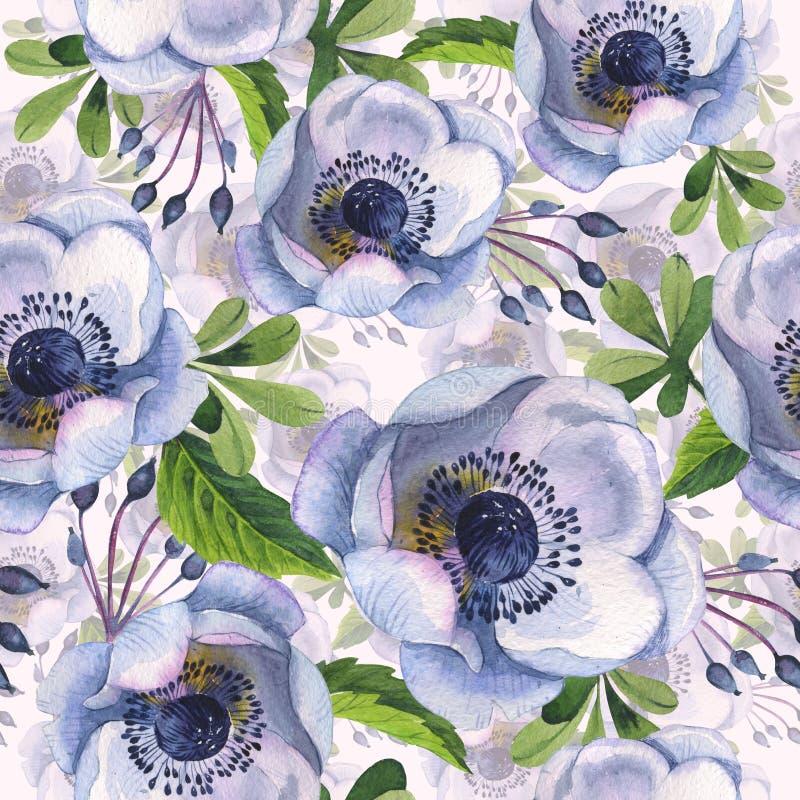 Modèle de fleur d'anémone de Wildflower dans un style d'aquarelle d'isolement illustration stock