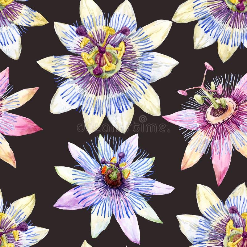 Modèle de fleur de passion d'aquarelle illustration stock