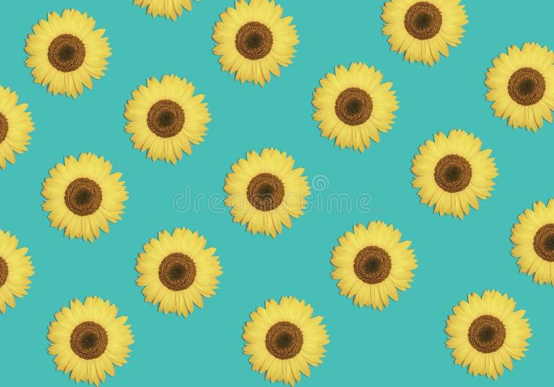 Modèle de fleur des tournesols ou du fond floral vibrant de beau ressort Conception d'été illustration stock