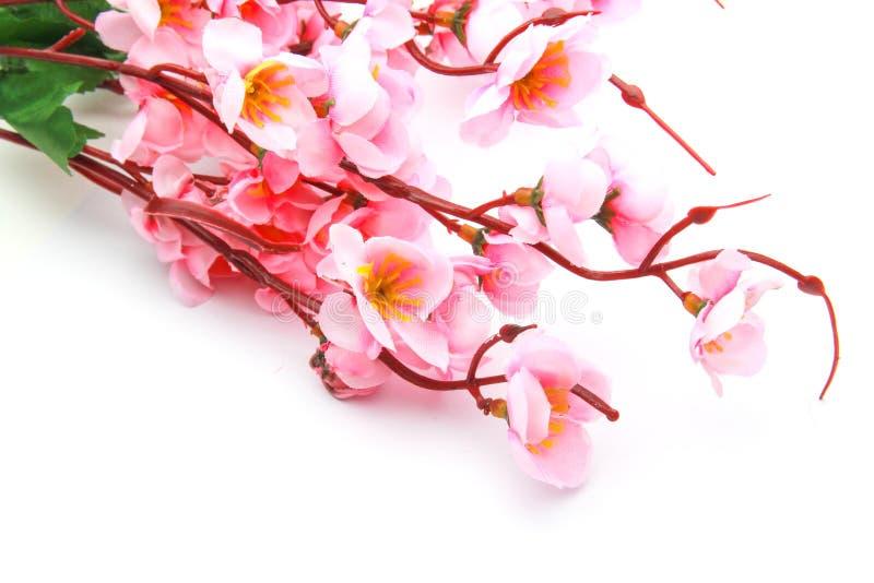 Modèle de fleurs de cerisier image libre de droits