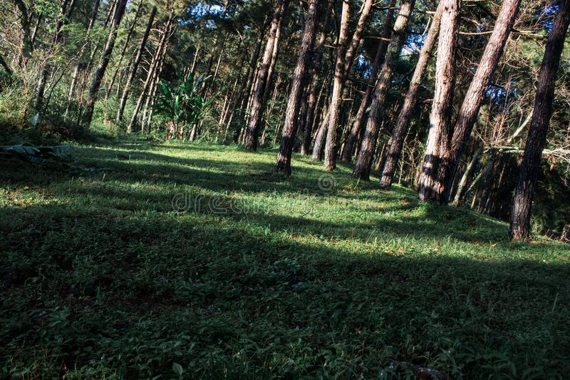Modèle de fond d'arbres de nature Forest Environment vert photos stock