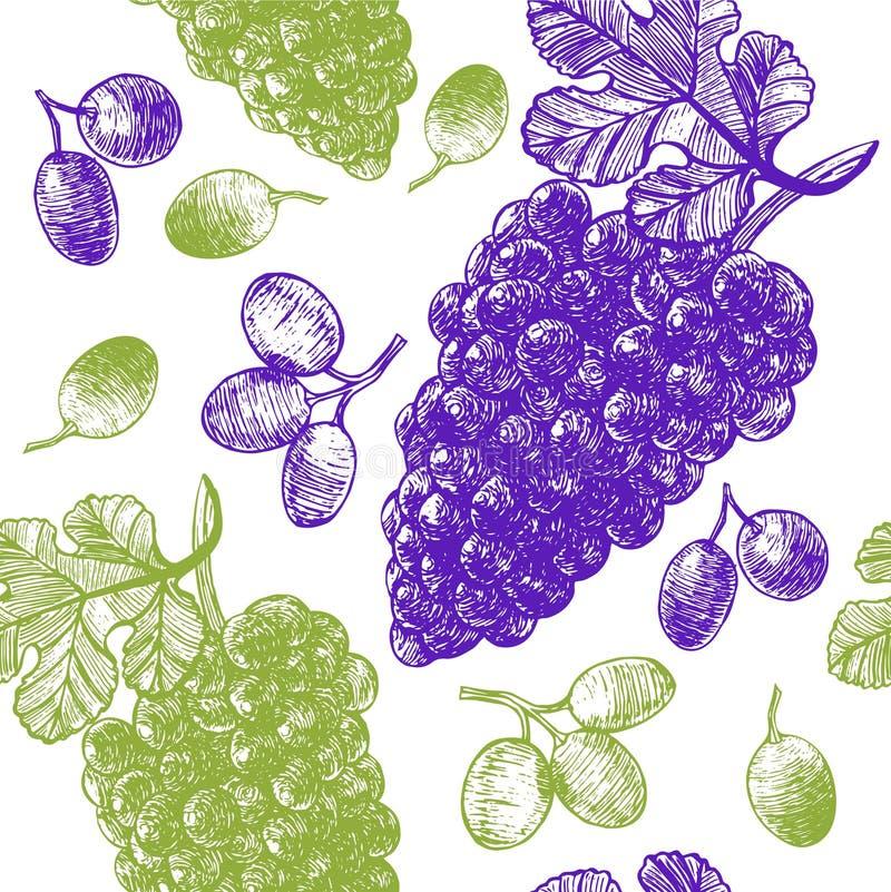 Modèle de fond de croquis d'aspiration de main de raisin Vecteur illustration de vecteur