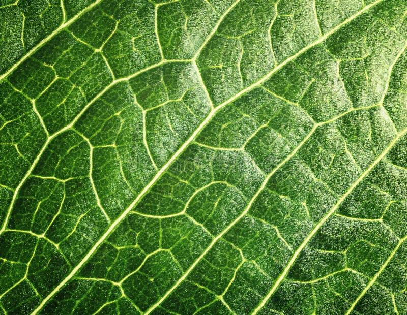 Modèle de fond de feuille verte d'arbre photo libre de droits