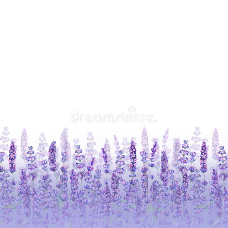 Modèle de gisement de lavande sur le fond blanc Fleurs tir?es par la main pour aquarelle, feuilles, usines illustration libre de droits