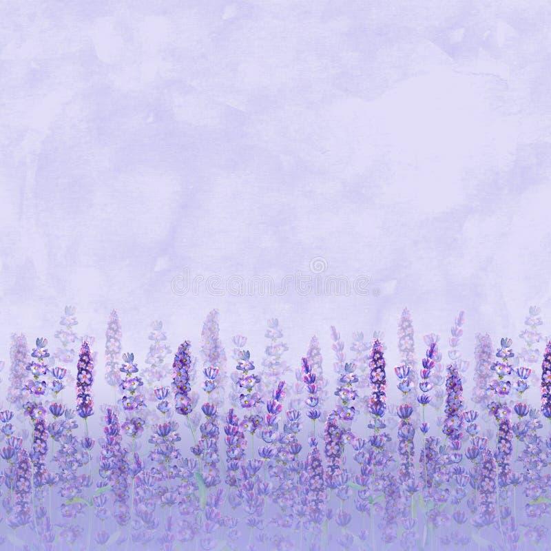 Modèle de gisement de lavande sur le fond pourpre Fleurs tir?es par la main pour aquarelle, feuilles, usines illustration de vecteur