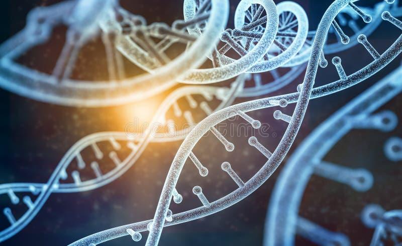 Modèle de l'ADN humaine illustration de vecteur