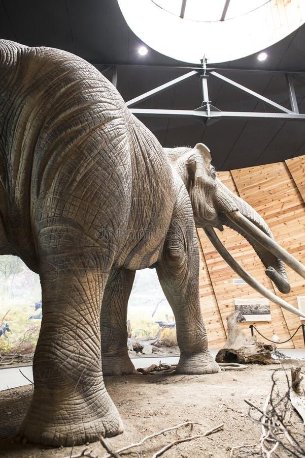 Modèle de mastodonte photo libre de droits