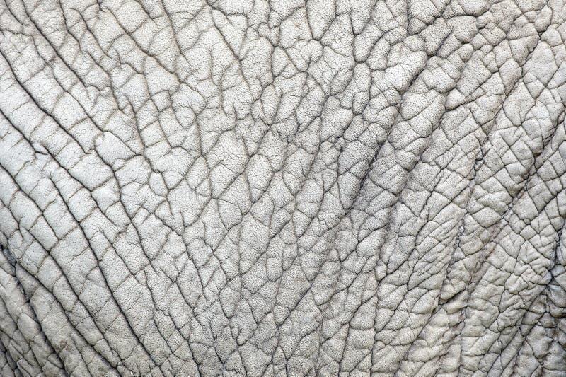 Modèle de nature de peau d'éléphant photos libres de droits