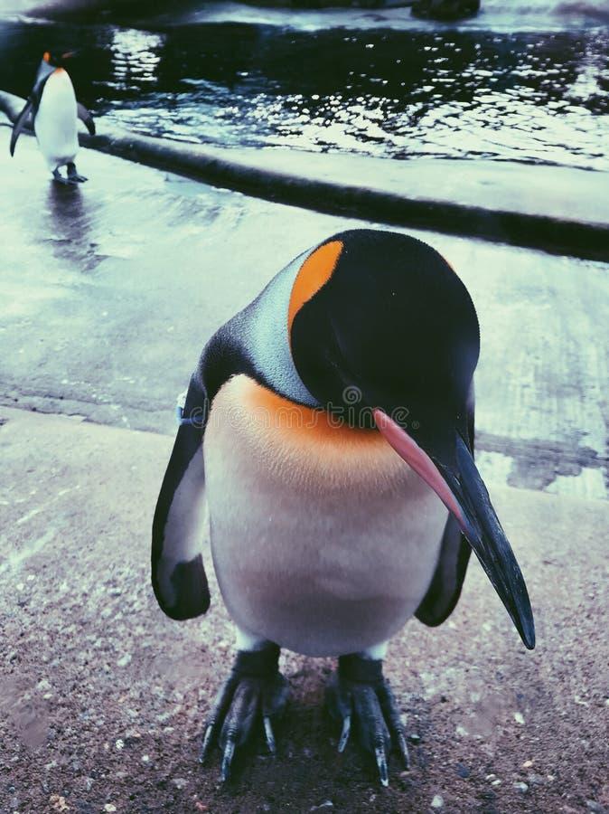 Modèle de pingouin image stock