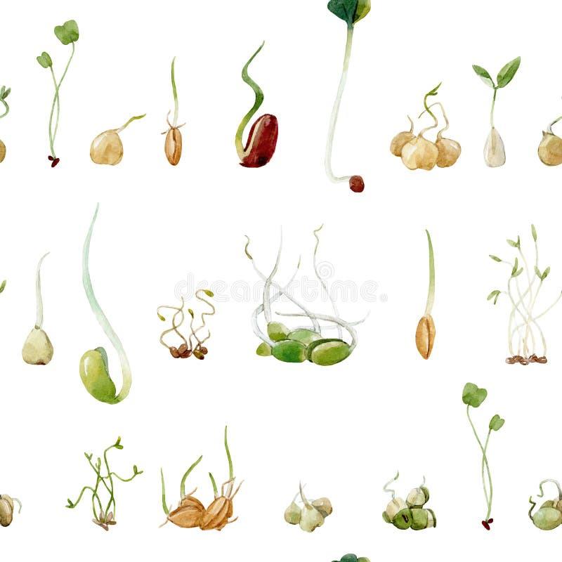 Modèle de pousses de graines de pois de haricots d'aquarelle illustration de vecteur