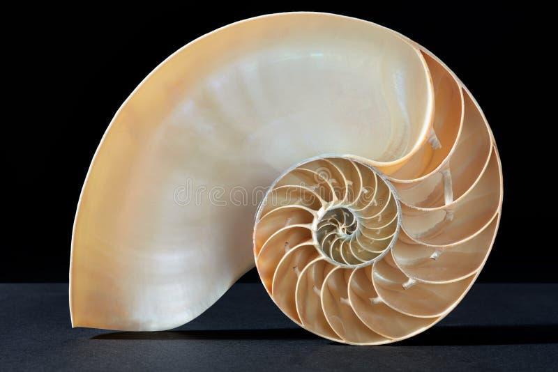 Modèle de section de coquille de Nautilus sur le noir images stock