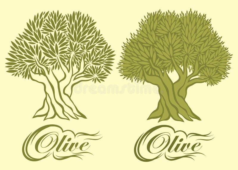 Modèle de vecteur avec l'olivier pour l'empaquetage illustration libre de droits