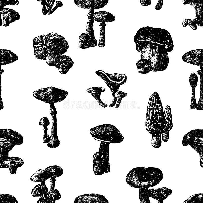 Modèle de vecteur de divers champignons illustration libre de droits