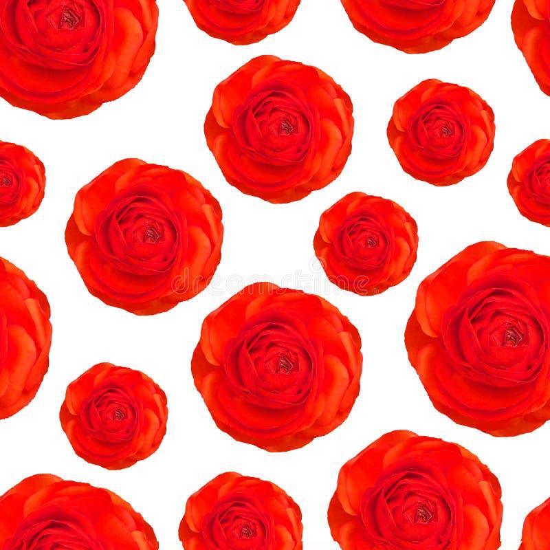 Modèle de vecteur de pavot rouge réaliste, fleurs de roses Anzac, souvenir dimanche Les fleurs défilent illustration stock