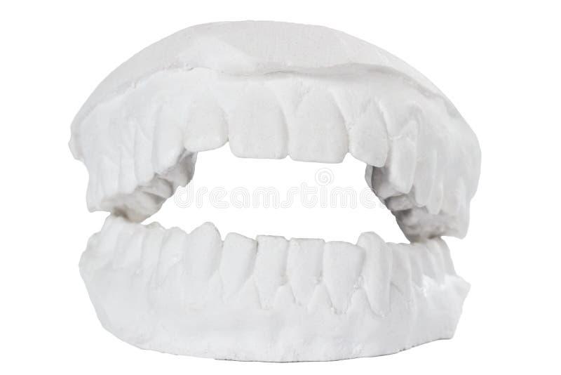 Modèle dentaire photo stock