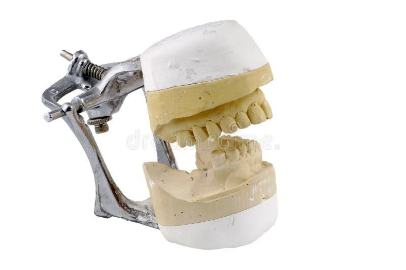 Modèle dentaire photographie stock
