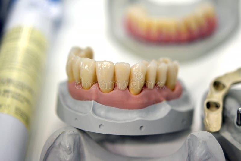 Modèle des dents humaines images libres de droits