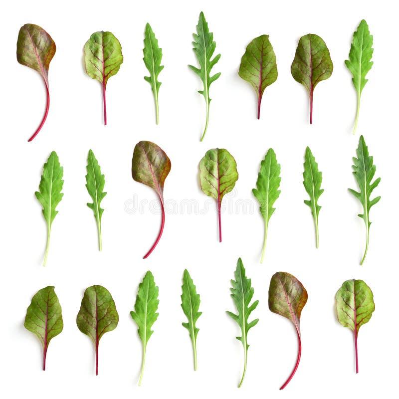 Modèle des feuilles de salade de cardon et d'arugula images stock