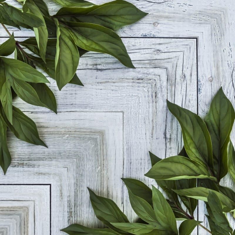 modèle des feuilles vertes et du fond clair en bois photo libre de droits