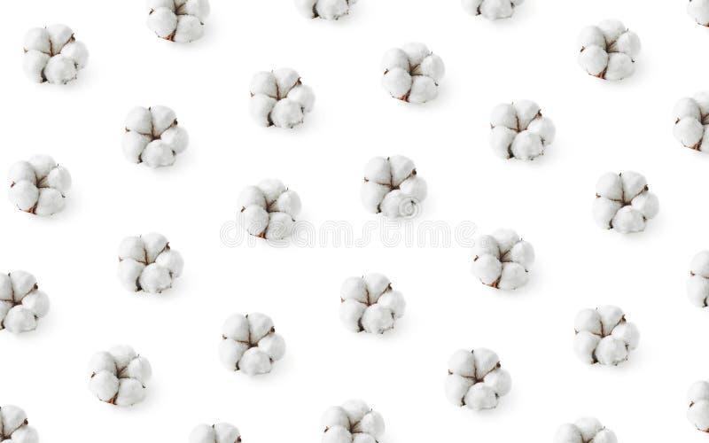 Modèle des fleurs de coton d'isolement sur le fond blanc photos libres de droits