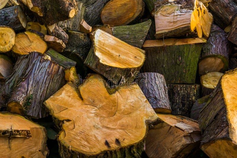 Modèle des rondins en bois coupés, fond en bois naturel, pile de bois boisé photographie stock