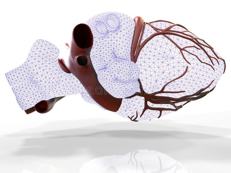 Download Modèle Du Rendu Humain Artificiel Du Coeur 3d Illustration Stock - Illustration du découverte, détaillé: 76076122