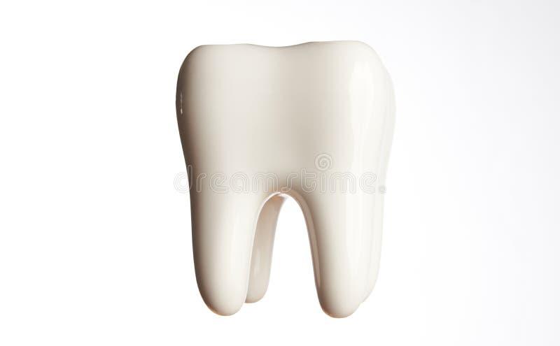 Modèle en céramique de dent d'isolement sur le blanc images stock