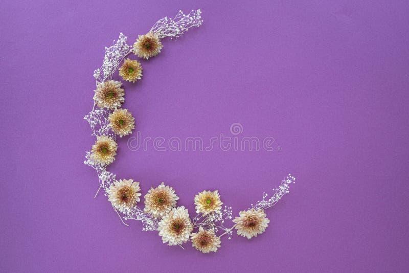Modèle en croissant de forme des fleurs de mamans images stock