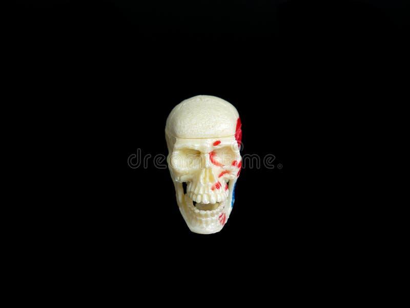 modèle en plastique d'un crâne humain images libres de droits