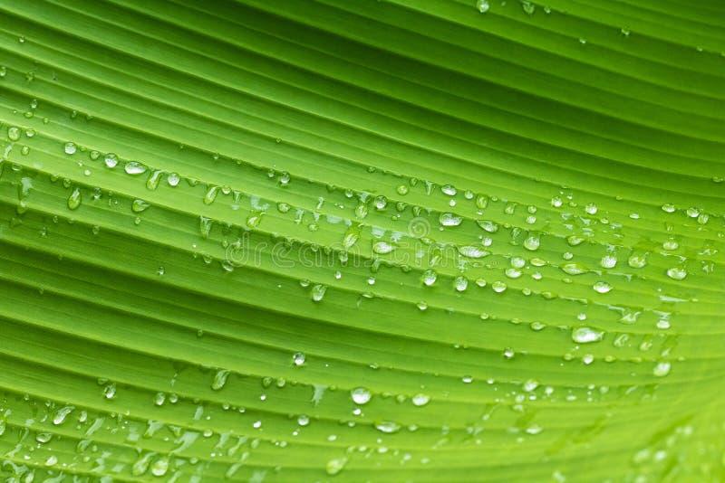 Modèle et rosée verts de feuille avec la ligne abstraite à l'arrière-plan de nature Fond vert de nature images libres de droits