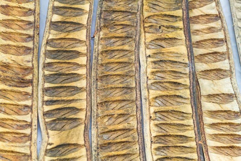 Modèle fait à partir de l'utilisation sèche d'arbre de gaine de pulcherrima de Caesalpinia photos stock