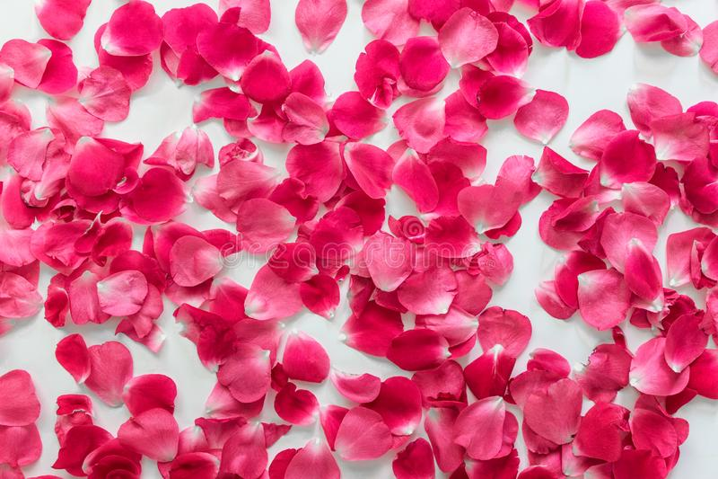Modèle fait de roses de thé aléatoirement disposées images libres de droits