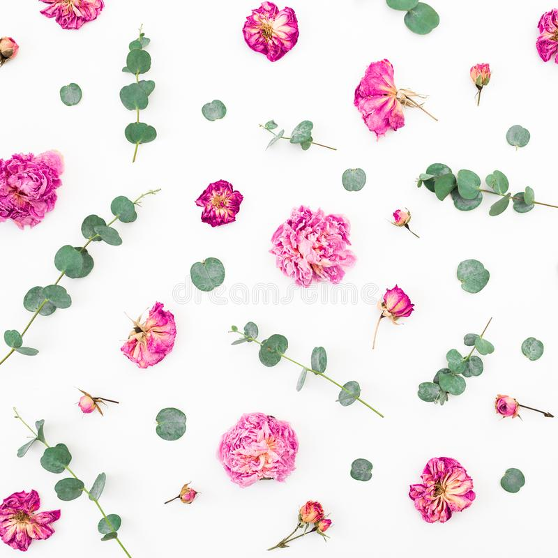 Modèle floral des fleurs et des branches roses sèches d'eucalyptus sur le fond blanc Configuration plate, vue supérieure Fond de  images stock