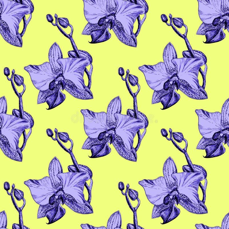 Modèle floral sans couture avec les orchidées tirées par la main sur le fond jaune illustration stock