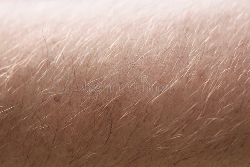 Modèle haut étroit humain masculin de peau et de cheveux macro image stock