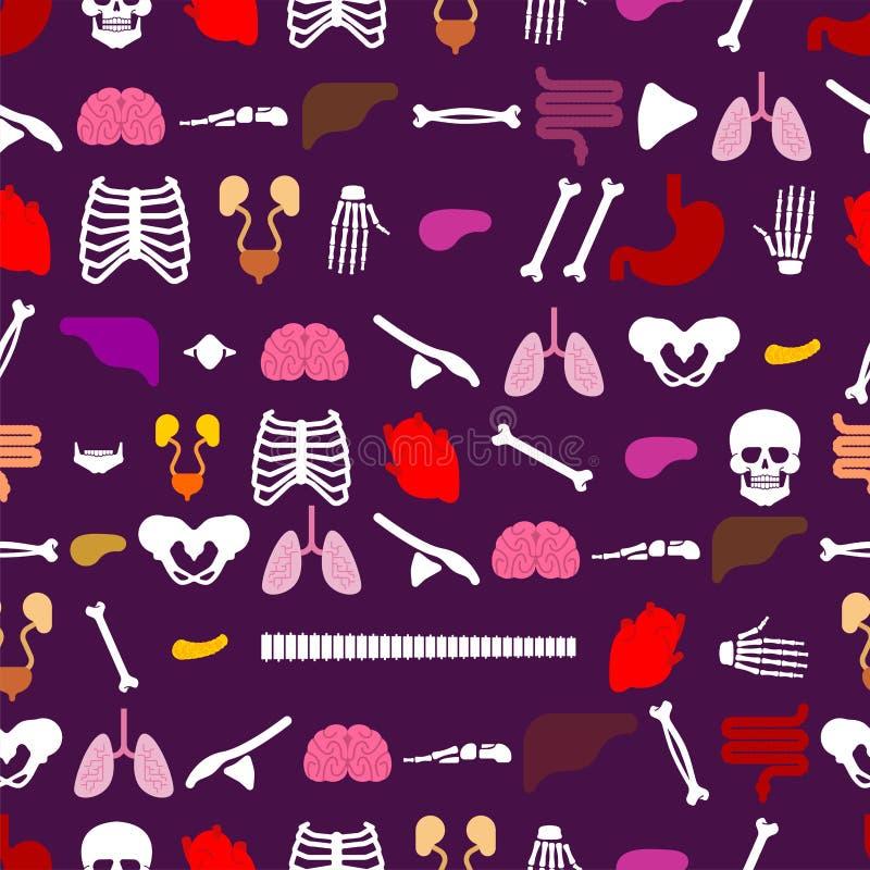 Modèle humain d'anatomie sans couture CCB d'organes squelettiques et internes illustration de vecteur