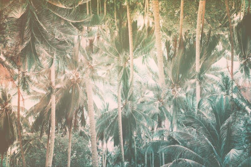 Modèle naturel avec la jungle tropicale de palmiers image stock