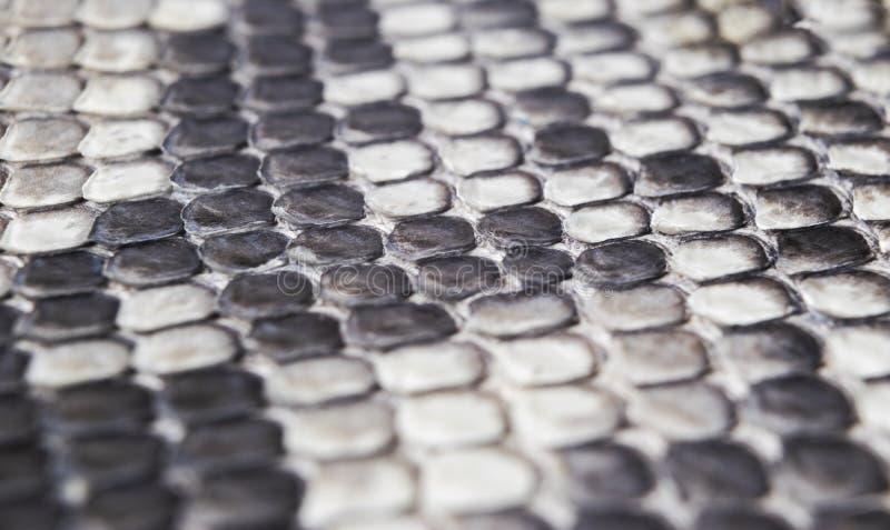 Modèle naturel de peau de serpent de structure Fond de peau de piton Fond de texture de peau de python La texture du serpent en c image stock