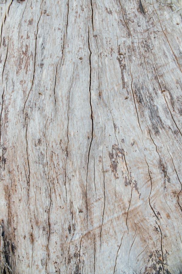 Modèle ou texture en bois d'écorce de nature Fond abstrait en bois naturel de vieux brun approximatif d'arbre images libres de droits