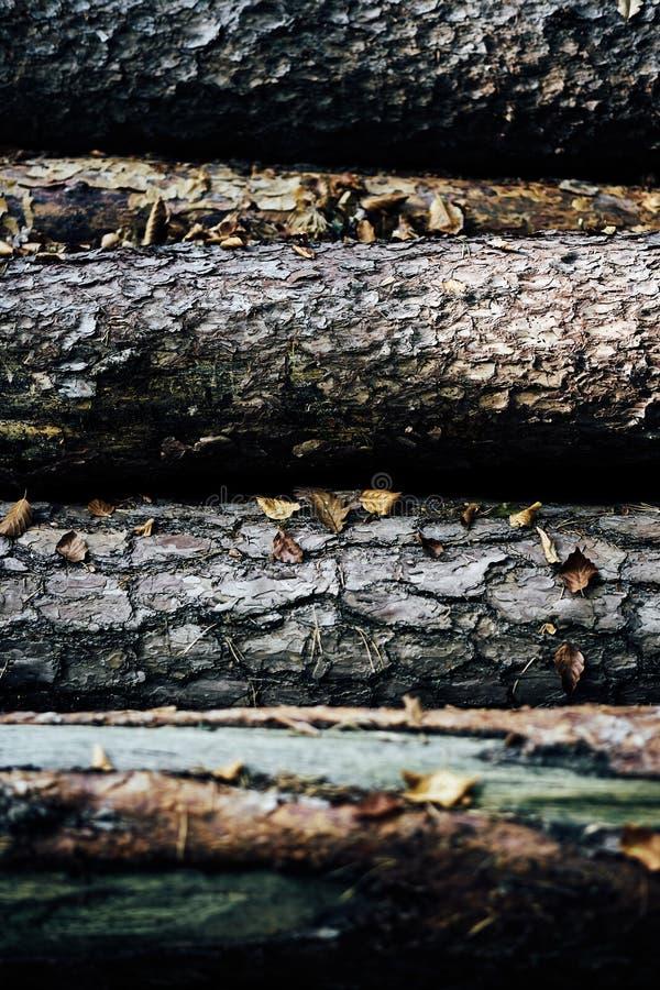 Modèle ou texture en bois d'écorce de nature Fond abstrait en bois naturel de vieux de la mort brun approximatif d'arbre Matériel photo stock