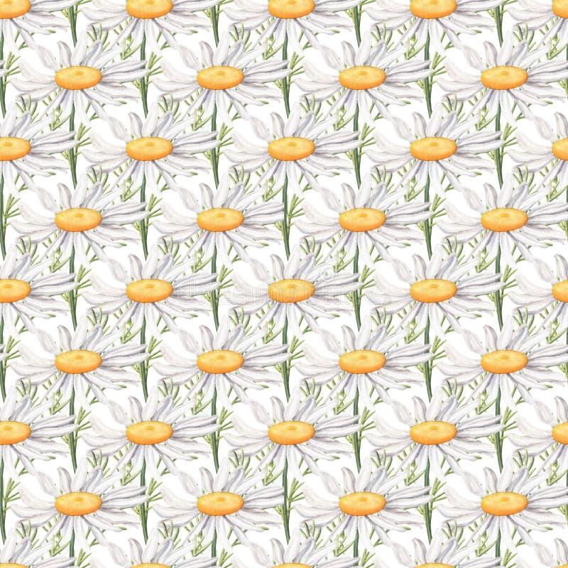 Modèle sans couture avec de grandes fleurs de camomille photos libres de droits